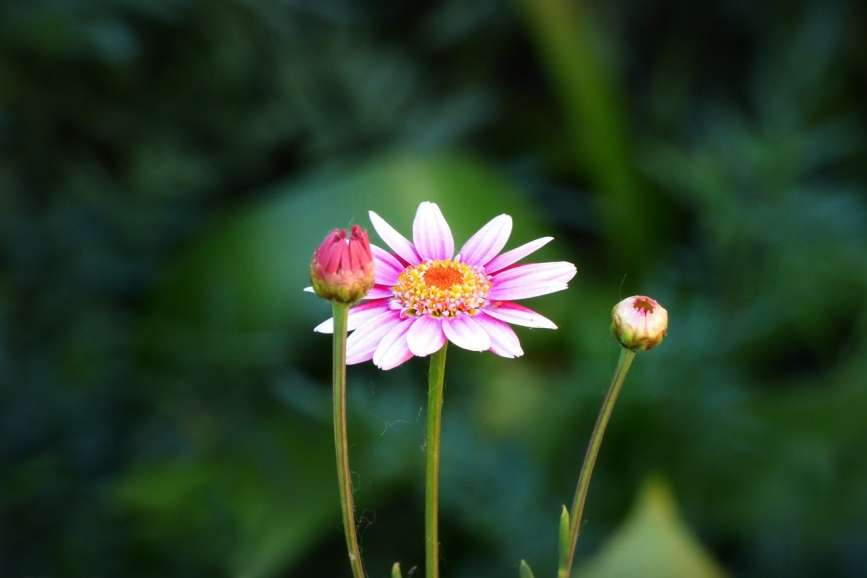 best garden fertilizer