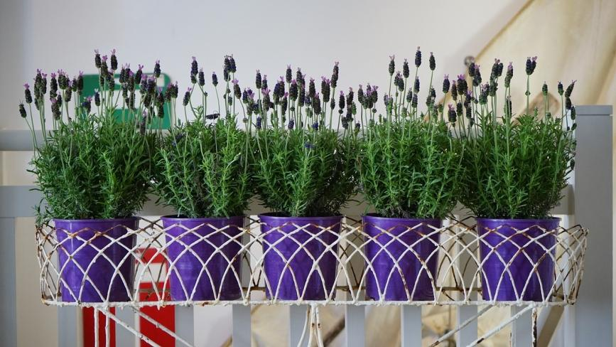 flower pots at home