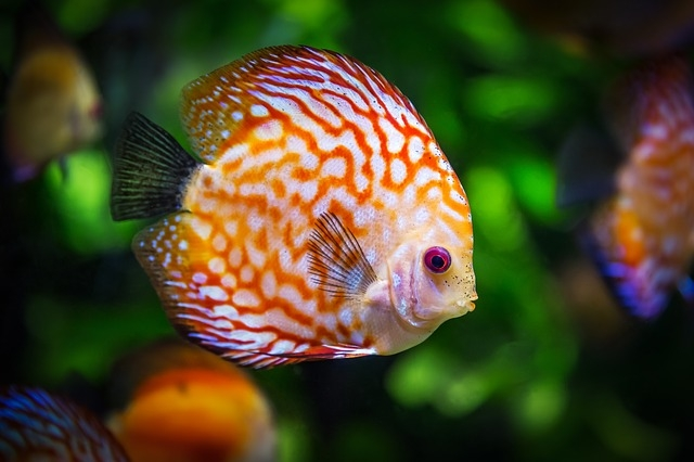 best food for fish