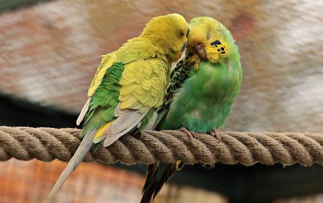 best toys for parrots