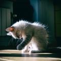 cat litter carpets