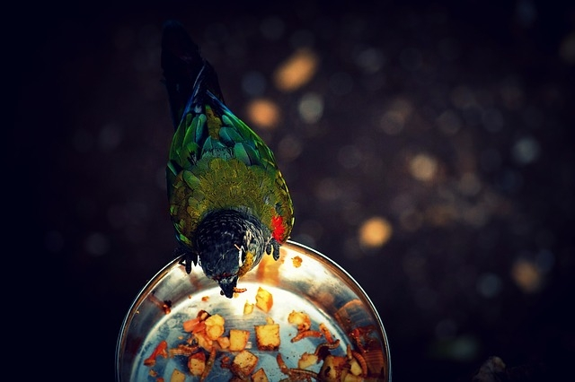best parrot and bird feeder