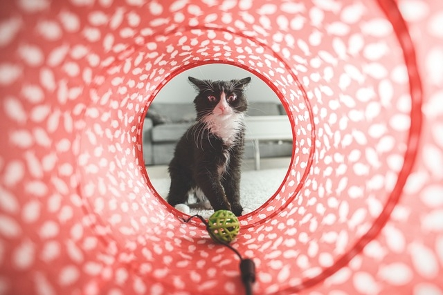 best cat toy tunnels