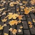 Leaf blow